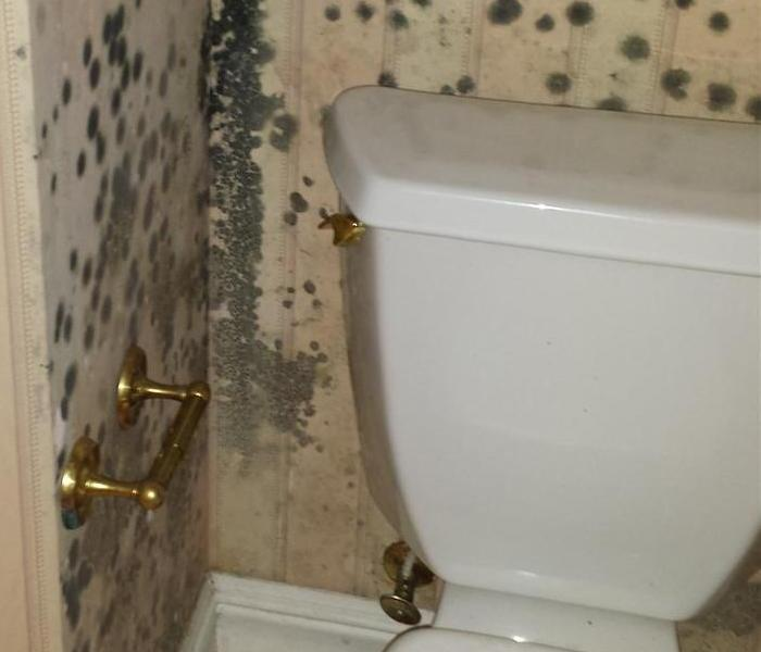 Mold Growth from a Toilet Water Leak in Palm Coast Flagler Beach FL