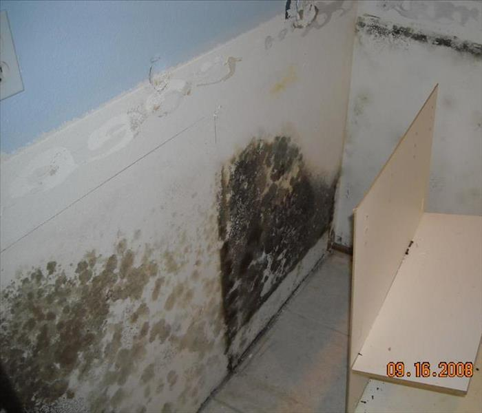 Mold Remediation Tips to prevent mold in your bathroom