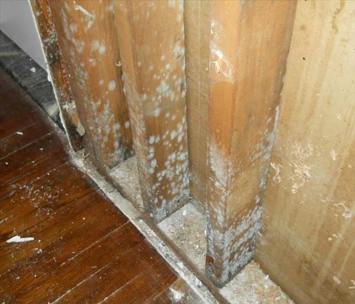 Mold Remediation Tips to Prevent Mold in Flagler Beach