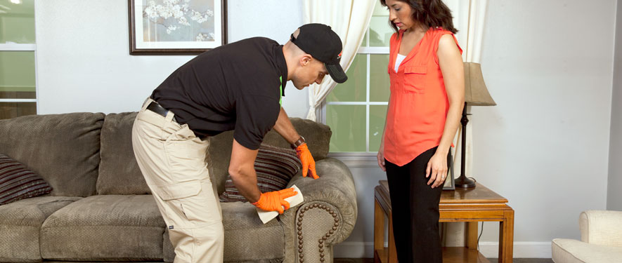 Palm Coast, FL carpet upholstery cleaning